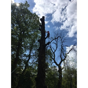 nt trees