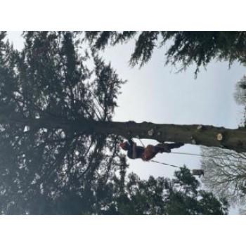 Greenacre Tree And Garden Improvements