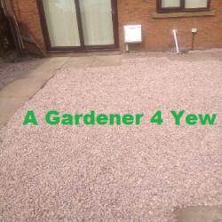 A Gardener 4 Yew