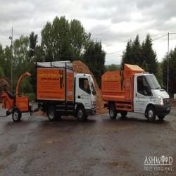 Ash Wood Tree Care